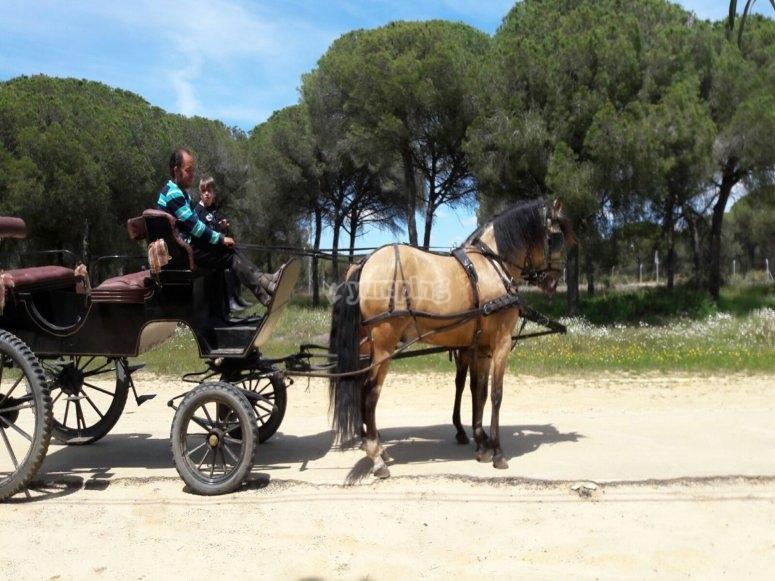 Paseo en carro de caballos por la ruta de Doñana
