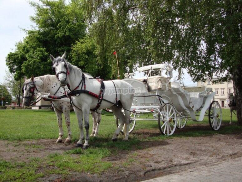 Paseo en carruaje de caballos por Huelva