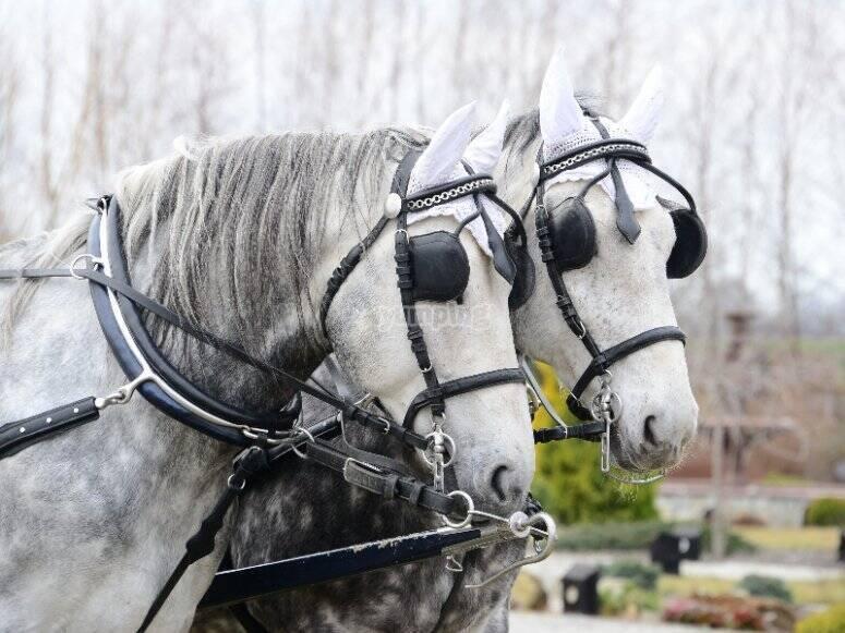 Viaje en coche de caballos por Mazagón