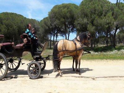 Itinerario gratuito in carrozza trainata da cavalli a El Rocío