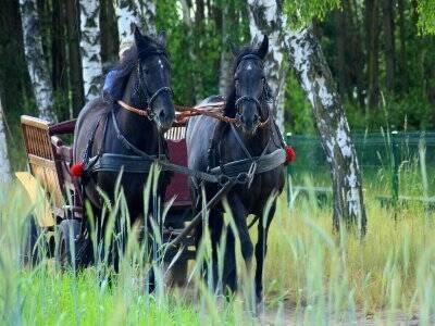 Paseo en coche de caballos por El Rocío 2 horas