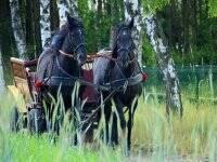 Paseo en coche de caballos por Andalucía