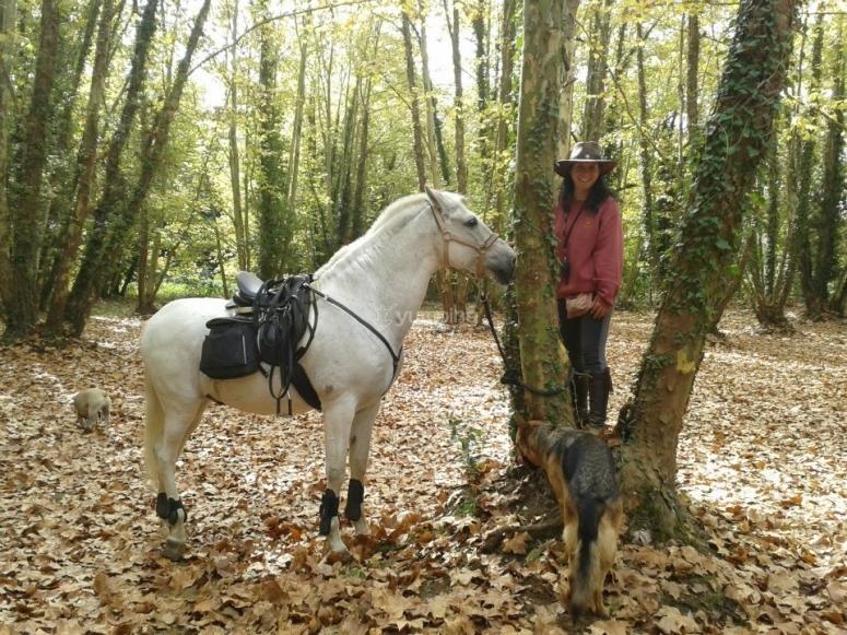 与马在森林里