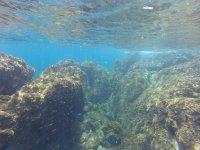 Flora submarina en Ceuta