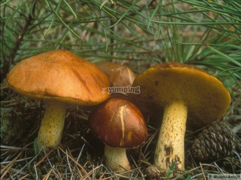 真菌发现新物种