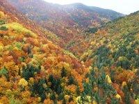 Bosques de Ribagorça