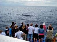Avistamiento de cetáceos y delfines Gran Canaria