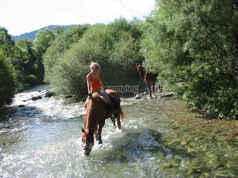 在河里喝水的马
