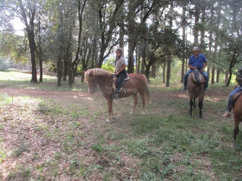En el bosque con los caballos