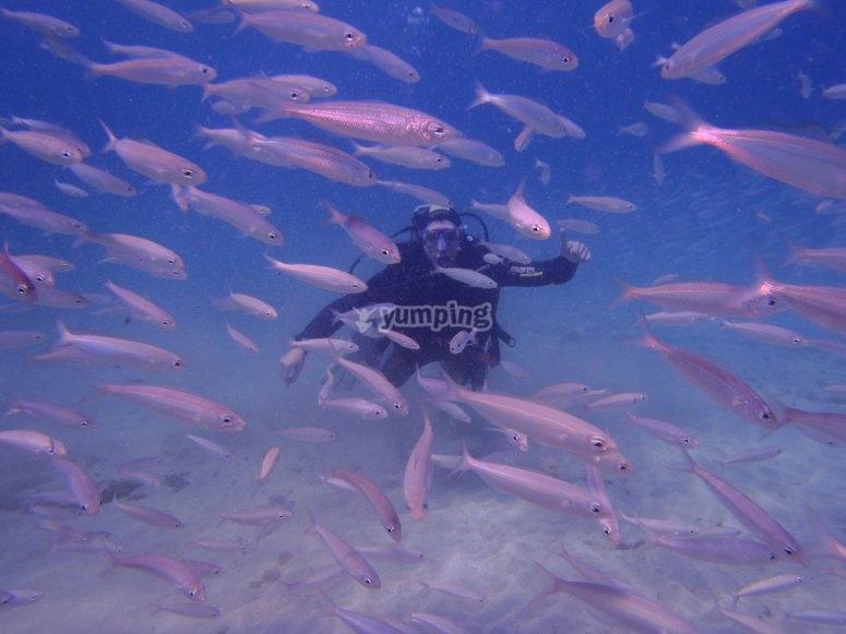 doble bautizo entre banco de peces