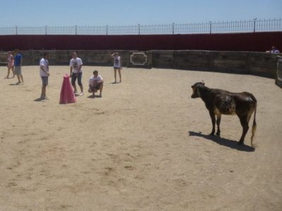 bull-fight in Navalcarnero with 2 calves