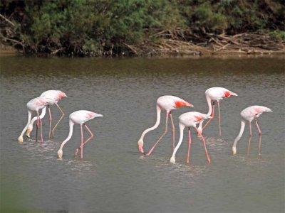 Ornitología en las Marismas del Odiel