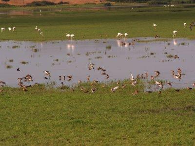 Ornitología en Doñana zona Norte