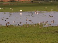 Doñana北区的鸟类学