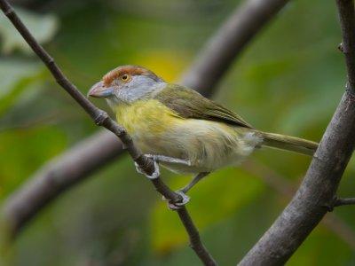 观鸟在南Doñana