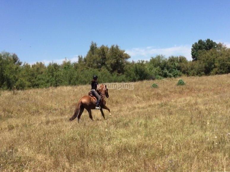 Ruta a caballo en Doñana