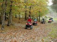 Ruta sobre un manto de hojas