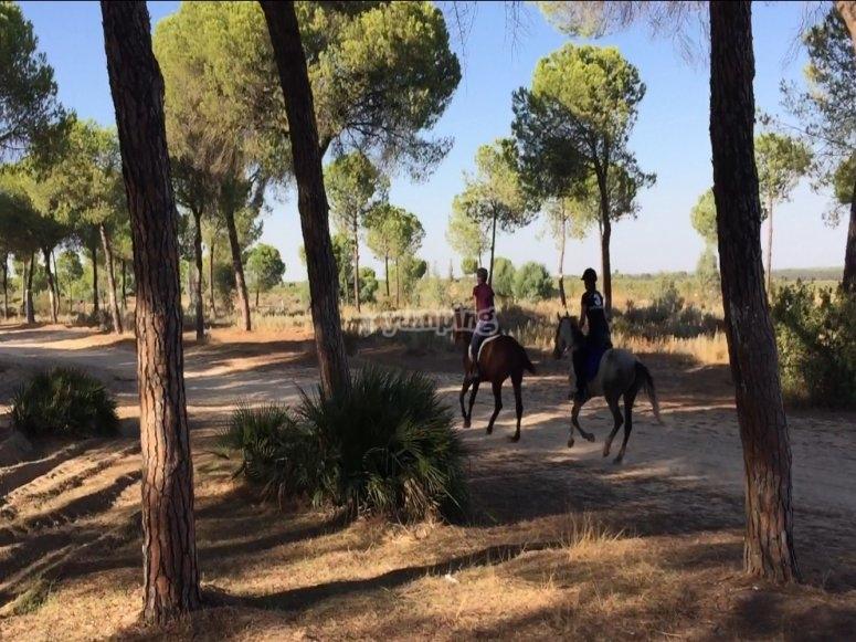 rutas a caballo por Doñana