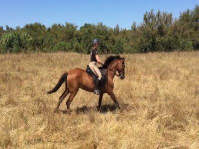 Montar a caballo en Parque de Doñana 2 h