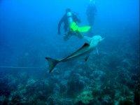 鱼类追随潜水员