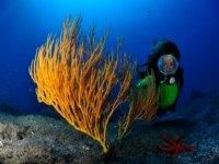 explorando las profundidades