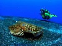 submarinismo en el barranco del eco