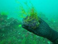 Sosteniendo fauna marina