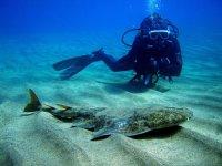 兰萨罗特岛双人引导潜水