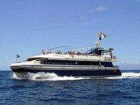 惊人的海洋野生动物乘坐双体船