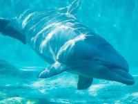 Fauna marina sorprendente