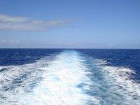 大型海洋哺乳动物,我们通过特内里费岛南部水域航行