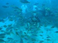 Ocultos entre el banco de peces