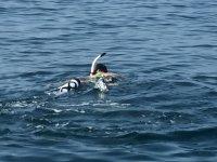 Realizando snorkel con las gafas, el tubo y las aletas