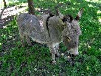 Nuestro burro Antonio
