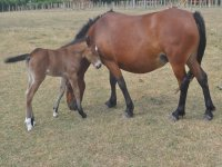 Pony con su madre