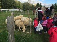 Saludando a las ovejas