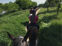 On the trail with horses