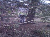 Escenario en Bosque