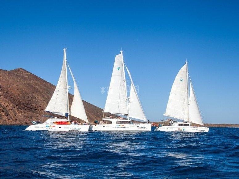 双体船穿越富埃特文图拉