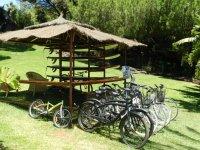 Alquiler de bicis. En zona Playa