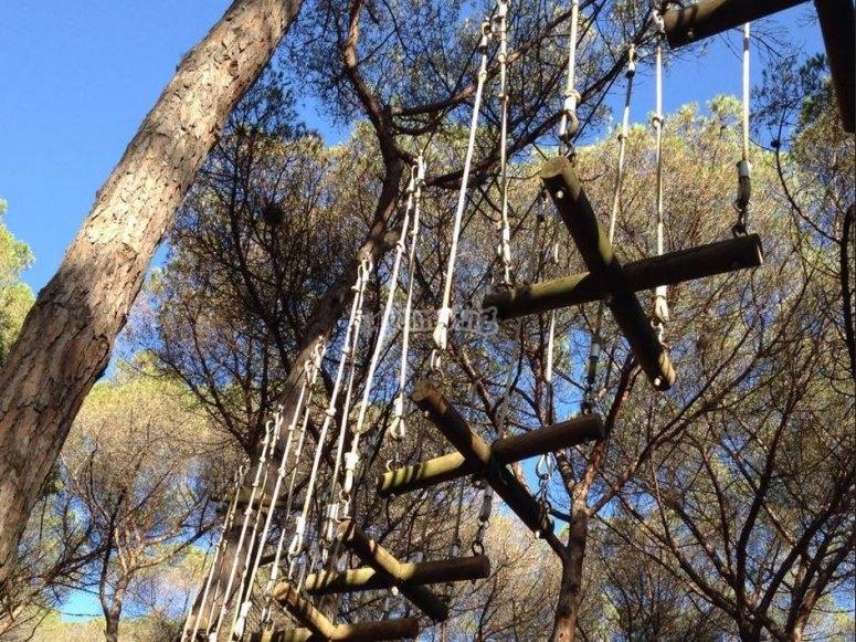 Pasarela en el circuito de arborismo