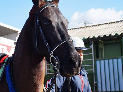 Lezioni di equitazione in Móstoles bonus 10 classi