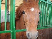 caballo en su cuadra