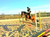Jumping training with the horse