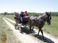 Paseo en carruaje en Soria