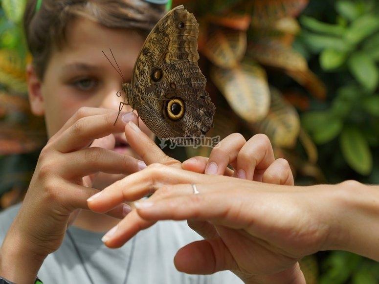 Conoceran nueva fauna y flora