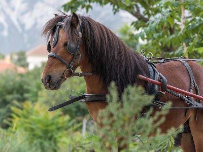 Escapada romántica a caballo en el Padul
