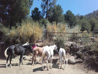 Paseo a caballo para dos por el Valle de Iruelas