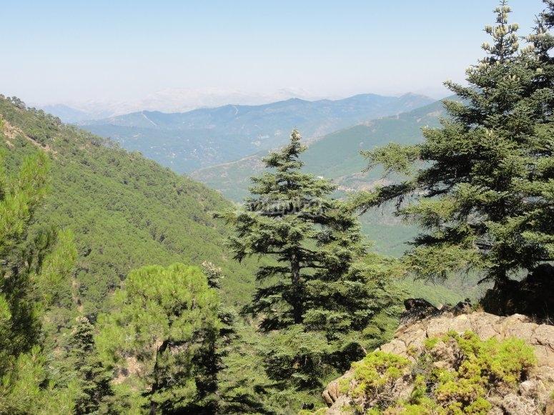 Bosques de la Sierra de Malaga
