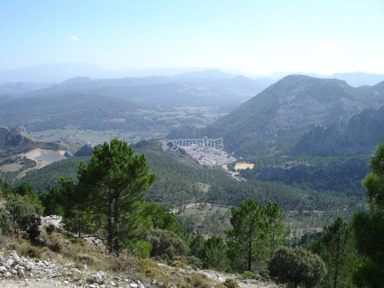 Forests of Grazalema